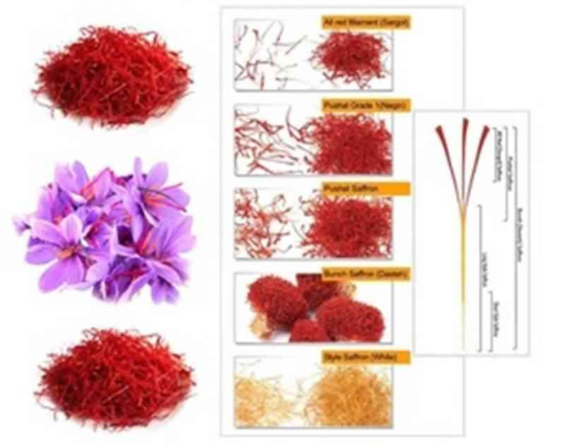 Grade 1 Saffron Sri Lanka